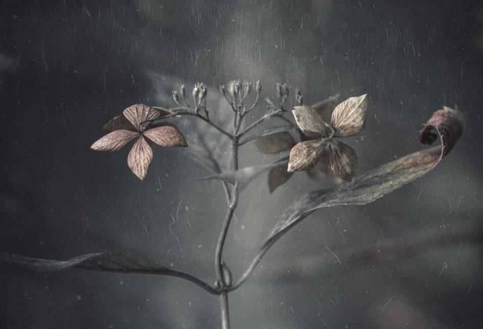 flor-do-novo-mundo