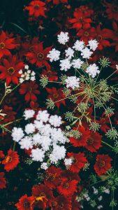 flores-vermelhas
